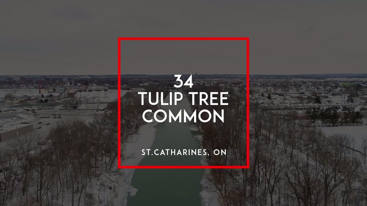 34 Tulip Tree Common
